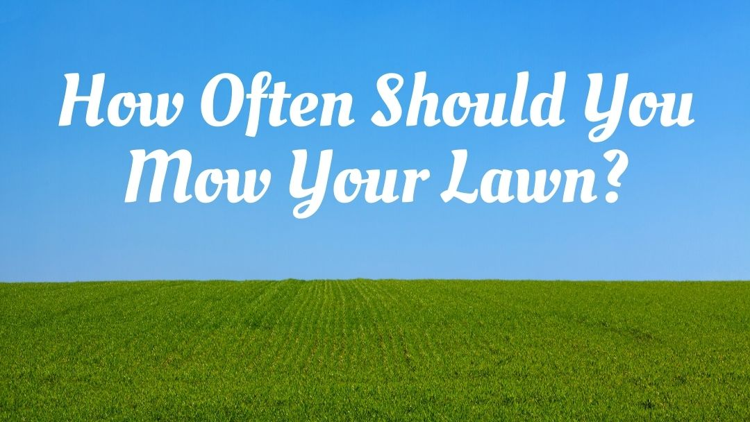 How Often Should You Mow Your Lawn How Often Should You Mow Your Lawn