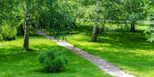 big lawn for robot mower